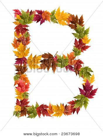 The letter B made from autumn maple tree leaves