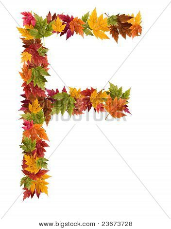 The letter F made from autumn maple tree leaves