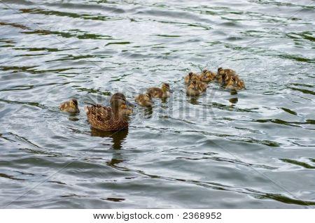 Aqua Family