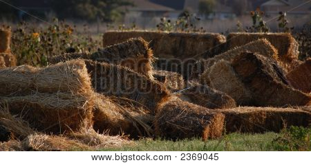 Afternoon Haybales