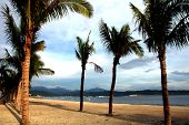 stock photo of olongapo  - Palm Trees on Subic Bay in The Philippines - JPG