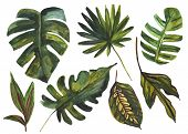 Watercolor Tropical Leaf Set. Drawing Of Unusual Leaves Isolated On White Background. Hand Painted E poster