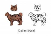 Set Of Colorful And Monochrome Contour Drawings Of Head And Body Of Kurilian Bobtail Cat Isolated On poster