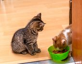 A Ginger And White Kitten Eating A Soft Canned Cat Food From A Green Bowl. Tabby Kitten Sitting And  poster
