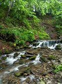 stock photo of irish moss  - Woodland Stream in Carpatian Wood - JPG