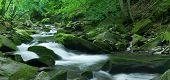 stock photo of irish moss  - Woodland Stream in Sheffrey Wood Ireland  - JPG