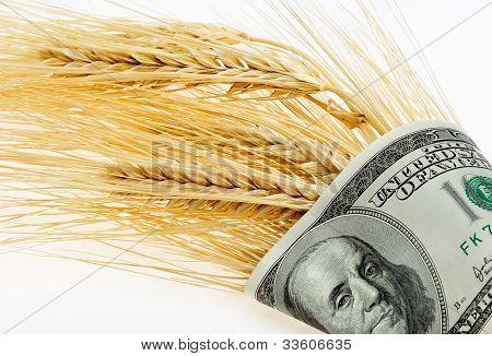 Espigas de trigo envuelta en dólares en un fondo claro