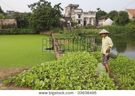 Duong Lam Village, Vietnam