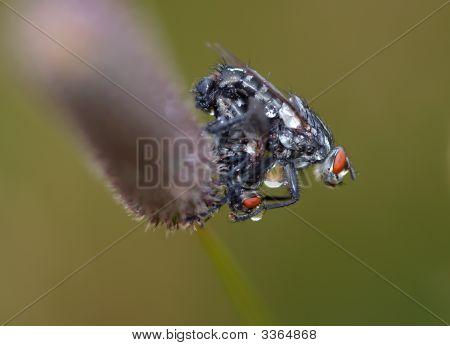 Wetted Flies