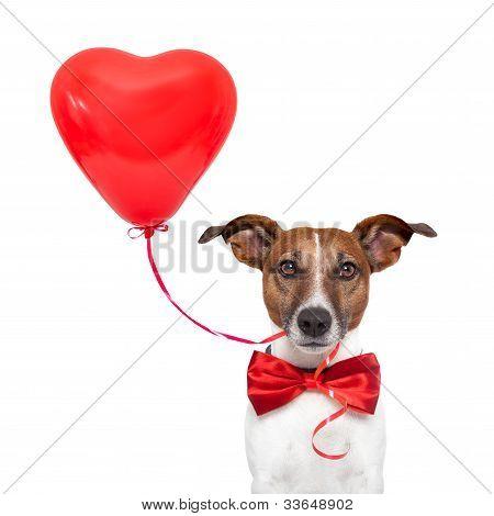 Perro en el amor