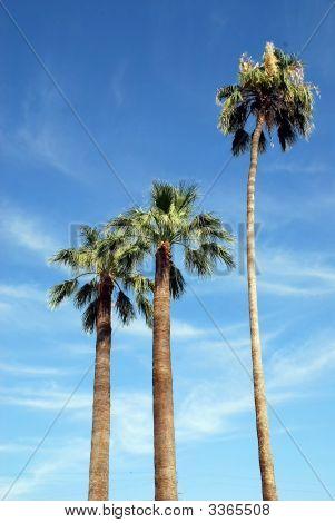 Palmtree Postcard