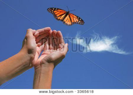 Borboleta monarca lançada