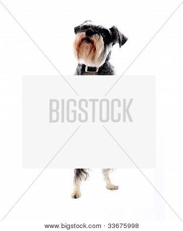 Schnauzer Dog Holding Blank Banner Ad