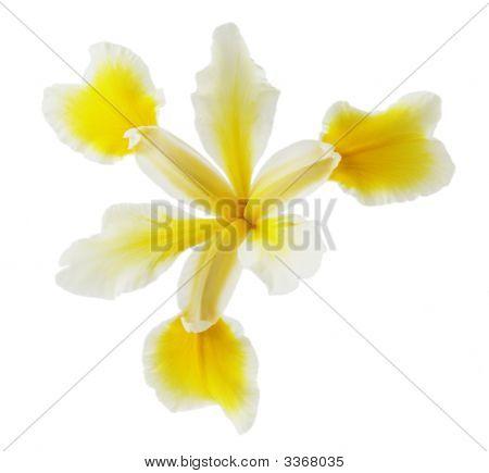 La Senda Iris
