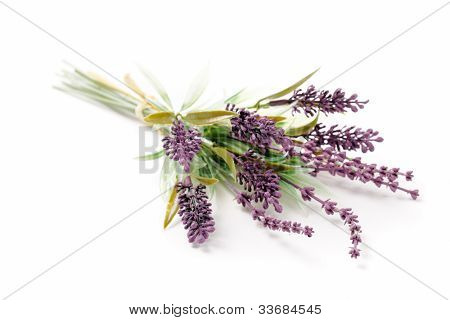 Lavender flower on a white background