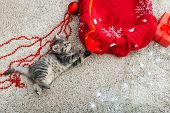 Funny Little Kitten Plays With A Christmas Decor. Christmas Tabby Kitten. Christmas Presents Concept poster