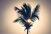 Sunset In Vacation Background. Palm Tree Silhouettes Background. Tropical Tree In Sunset. Vacation B poster