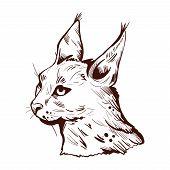 Caracal Wild Cat Isolated Vector Illustration Monochrome Sketch Icon. Hunting Season, Wildlife Felin poster