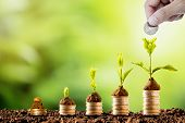 Plant Glowing On Coins Stacking On Soil And Greenery Background.dividend Of Banking Deposit And Stoc poster