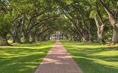 picture of slavery  - Oak Alley Plantation Tree  - JPG
