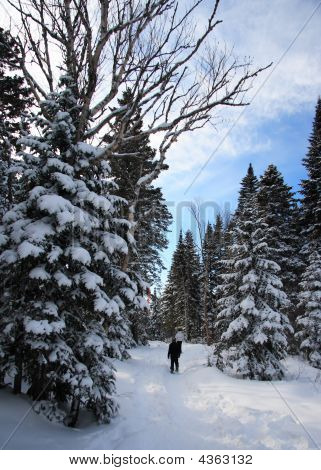 Snowshoeing In Winter Landscape