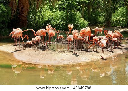 Flamingos Sitting On Nests