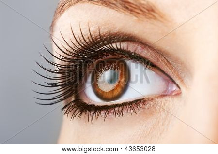 Woman Brown Eye With False Lashes