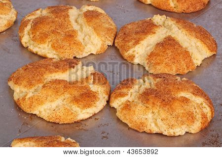 Freshly Baked Snickerdoodles Still On The Pan