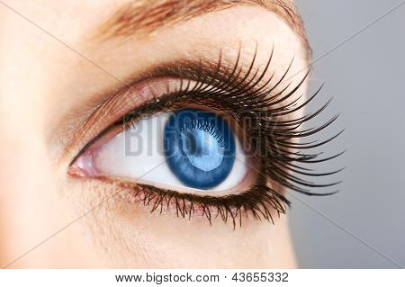 Female Blue Eye With False Lashes