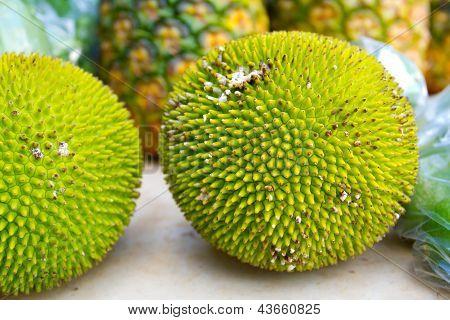 Jackfruit Or Jakfruit Or Breadfruit