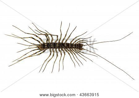 household bug