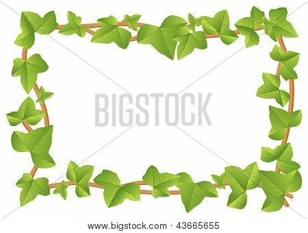 Ivy Frame