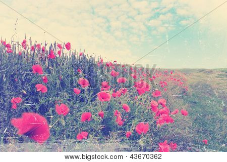 Field Of Red Poppies,vintage