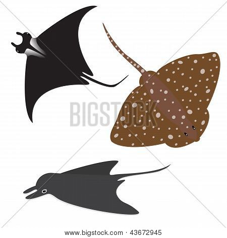 Stingray vector set
