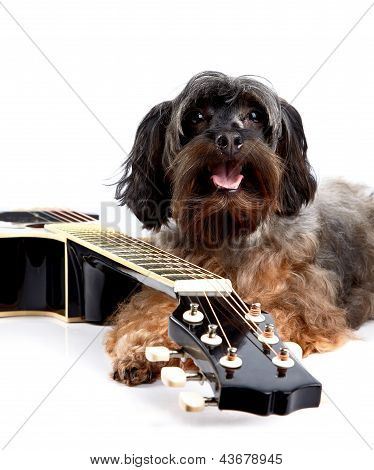 Doggie And Guitar.