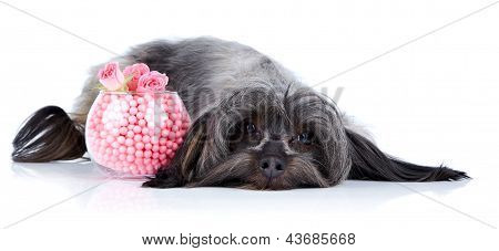 Decorative Doggie And Vase With A Beads And Roses