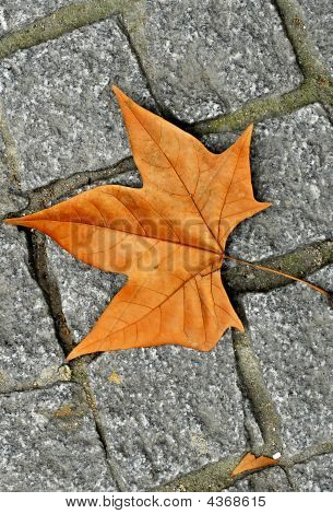 Leaf Brick Pattern Abstract