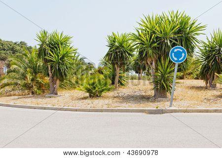 Traffic Circle With Palms