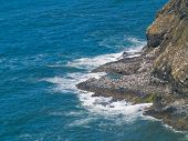 picture of mear  - Rugged Rocky Coastline on the Oregon Coast Overlook from Cape Meares Lighthouse - JPG