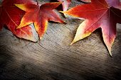 stock photo of october  - Autumn leaf background - JPG