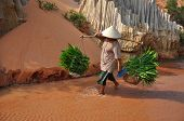 Farmer vietnamese woman carries her herbs