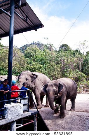 CHONBURI,THAILAND - December 23: Kids are enjoying feeding elephant at Zoo in Chonburi Province In T
