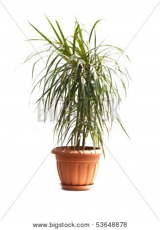 Room Palm
