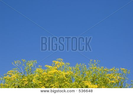Yellow Flower Under The Sky