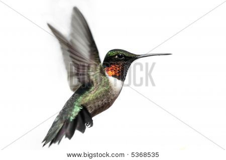 isoliert Ruby throated Kolibris