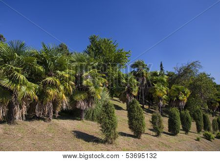 Sunny Palm Forest
