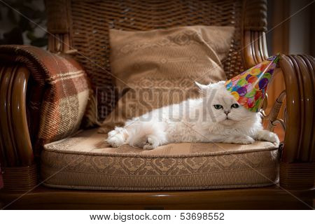 Cute cat wearing a party hat relaxing on an armchair