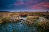stock photo of ling  - dramatic sunset over wild bog with dead trees Fochteloerveen Drenthe Netherlands - JPG