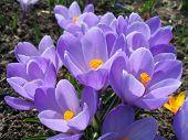 image of beautiful flower  - flowers - JPG