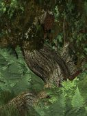 picture of stomp  - Jungle Background with a tree and green plants - JPG